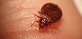 แมลงอาจเป็นอันตรายต่อมนุษย์