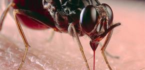 เกี่ยวกับแมลงกัดและการรักษาของพวกเขา