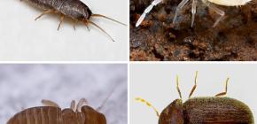 สิ่งที่แมลงขนาดเล็กสามารถพบได้ในอพาร์ทเม้น