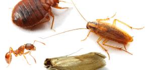วิธีการต่อสู้กับแมลงในบ้านในอพาร์ตเมนต์