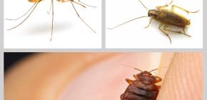 ยาฆ่าแมลงในบ้าน: ทบทวนยาเสพติด