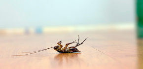 การเลือกยาพิษที่มีประสิทธิภาพสำหรับแมลงสาบ