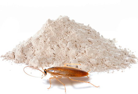 ผงเพื่อกำจัดแมลงสาบ: การทบทวนวิธีการที่มีประสิทธิภาพ