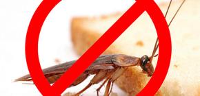 การทำลายแมลง: เคล็ดลับที่มีประโยชน์และความแตกต่างที่สำคัญ