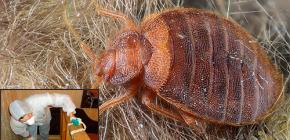 การทำลายแมลงในมอสโก: จะไปที่ไหนและค่าใช้จ่ายเท่าไร